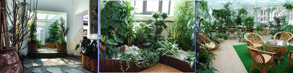 Зимний сад в квартир