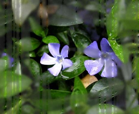 цветы любят влагу