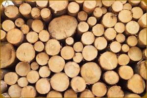 Зимняя древесина