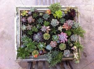 растения вертикального сада