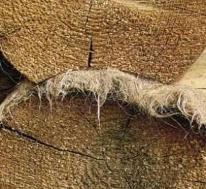 Реставрация бревенчатого дома