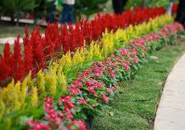 Обустройство цветника на участке