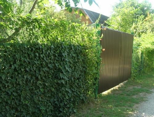 как сделать забор из сетки-рабицы непрозрачным