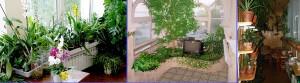 Лоджии с зимним садом