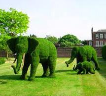 Озеленение на профессиональном уровне