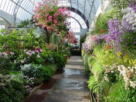 Обустройство зимнего сада: расположение, конструкция, отопление, освещение