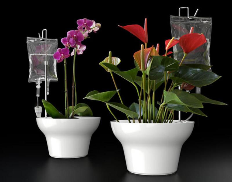 Как обеспечить автоматический полив цветов?