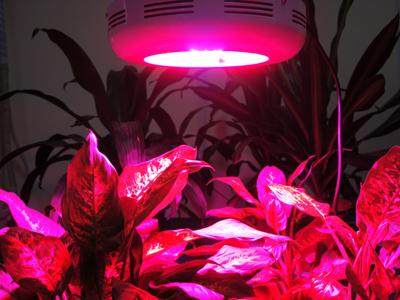 Элемент декора - светодиодные лампы для растений