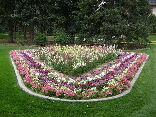 Виды и формы клумб. Выбор растений