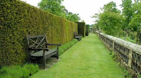 Живая изгородь: растения, посадка и стрижка