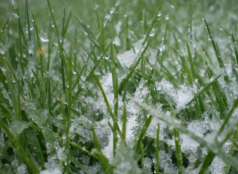 Подготовка газона к зиме: основные процедуры