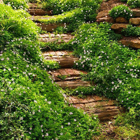 ТОП 7 способов оформить участок со склоном